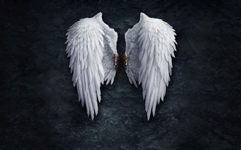 wings background wings backgrounds wallpaper cave