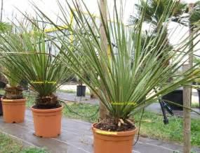 Plante Exterieur Resistant Au Gel