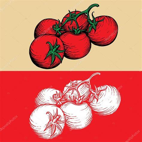 Läuse An Tomaten 5263 by Tomates Dibujo Vectorial Grabado Imagen Stock Archivo