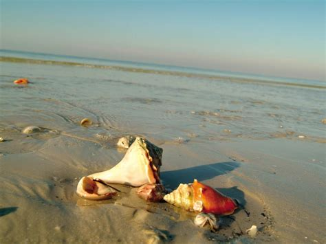 best beaches for seashells the world s best beaches for seashells travel