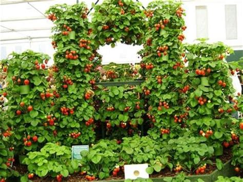 strawberry planter ideas strawberry pallet planters for fresh strawberries pallets designs
