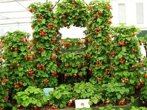 Strawberry Garden Ideas Strawberry Pallet Planters For Fresh Strawberries Pallets Designs