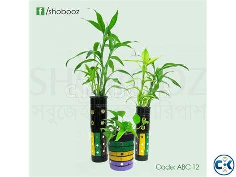 indoor plants online online indoor plants tree abc 12 clickbd
