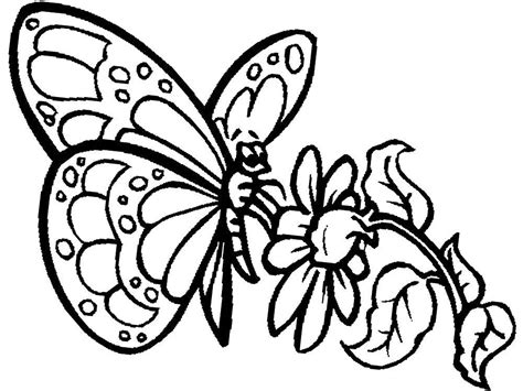 imagenes de mariposas lindas para colorear dibujos de mariposas bonitas para colorear