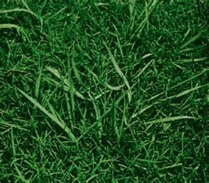 how to kill crabgrass look a likes