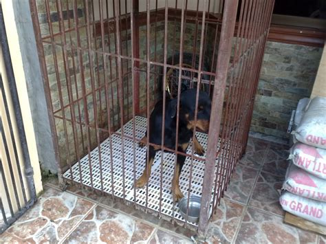 cage for rottweiler for trade small cage rottweiler w cage