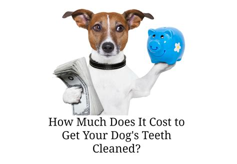 How Much Does It Cost To Get Your Mba by Teeth Cleaned