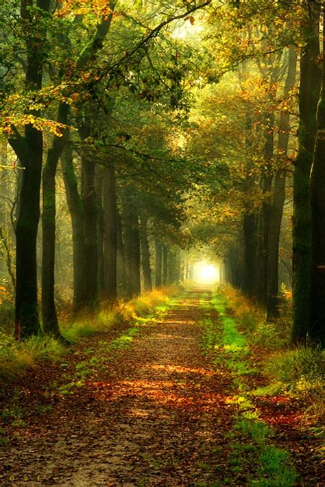 forest path the netherlands forest pinterest