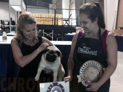 pug puppies san antonio pug club of greater san antonio wednesday july 9 2014 canine chronicle