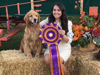 golden retriever national specialty 2016 golden retriever club of america national specialty