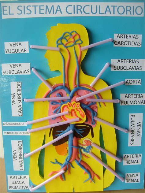 como hacer una maqueta del sistema circulatorio maqueta sistema cardiovascular imagui