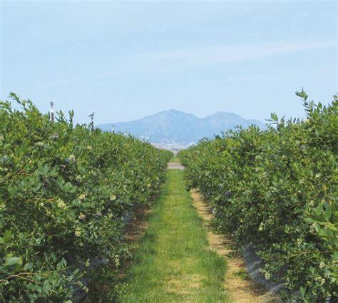 Oregon Blueberry Nursery by Regional Insights Of The United States Fall Creek Farm