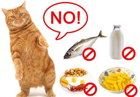 hypoallergenic food best hypoallergenic cat food for cats with allergies