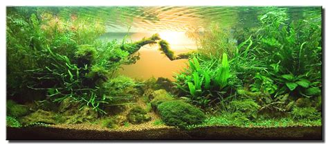 aquascape of the month may 2008 quot homeland