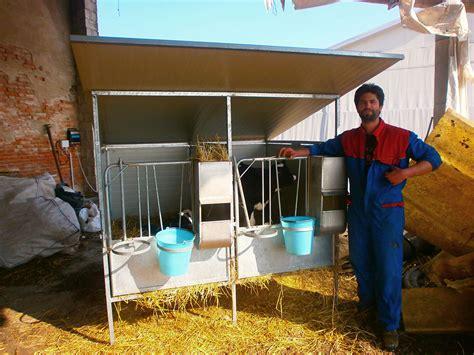 gabbie per vitelli box per vitelli box svezzamento bovini dalla mora