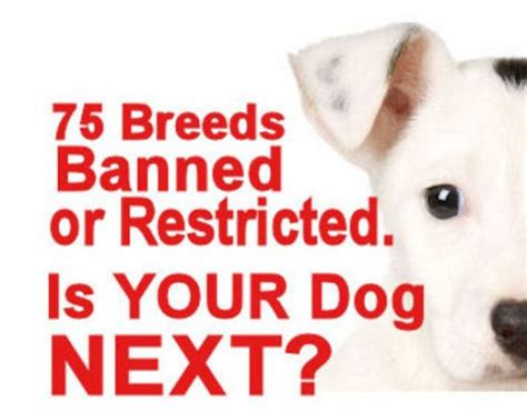 Essay Against Breed Specific Legislation by Real Dogs Real