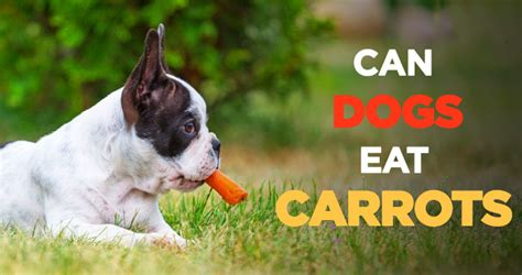 can dogs carrots can dogs eat carrots tasty nutritious and incredibly cheap treats