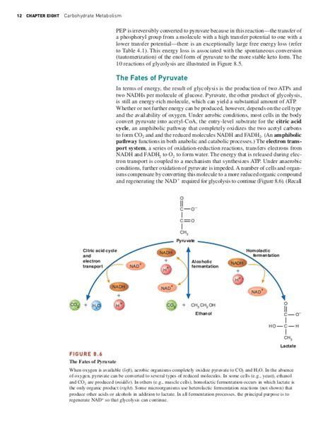 carbohydrates metabolism carbohydrates metabolism