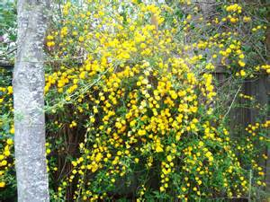yellow flowers on vines by pandaqueen818283 on deviantart