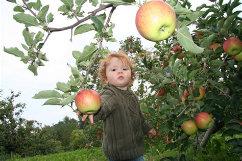 where to go apple picking across the us
