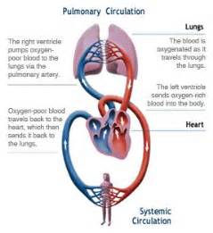 blood flow through the diagram step by step blood and the o jays on