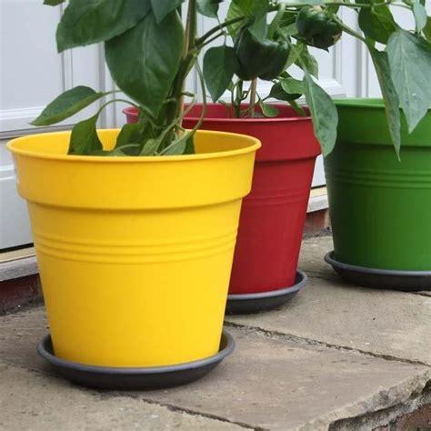 pin by norma salinas on gardening