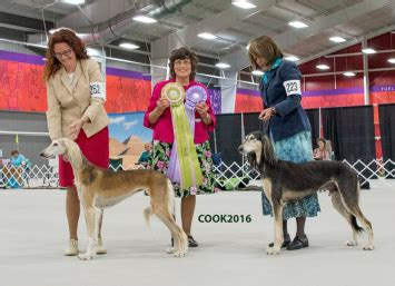 Www Sweepstakes Result - 2016 sweepstakes results saluki club of america