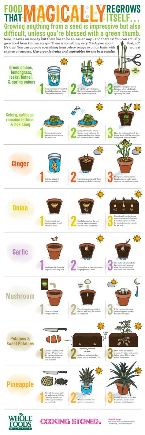 vegetables u can regrow here are the foods that you can magically regrow from