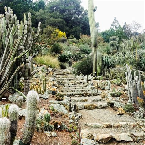 uc berkeley botanical garden adventures