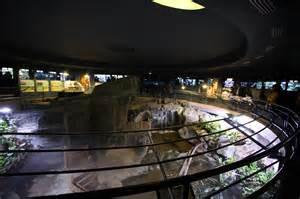 file aquarium tropical du palais de la porte dor 233 e 2 jpg