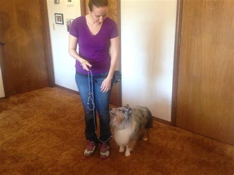 how to teach your to heel how to teach your to heel iheartdogs