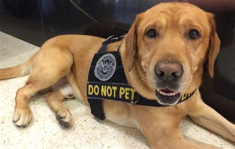 bomb sniffing dogs this is one way to ease bottlenecks at sea tac kuow news and information