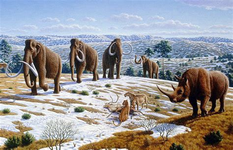wooly mammoth ice age why were mammals so mammoth during the last ice age