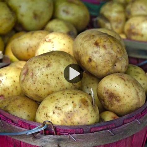 best type of potatoes for roasting the best types of potatoes for your vegetable garden