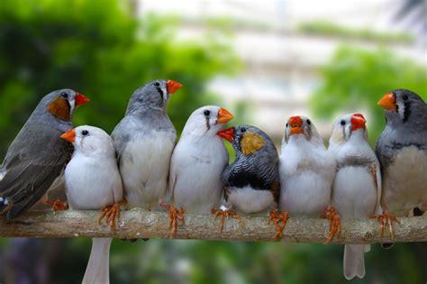 top 10 best pet birds for home