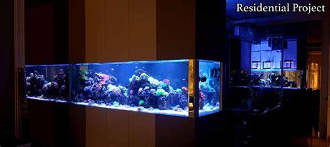 membuat sump filter akuarium air tawar kreatifitas