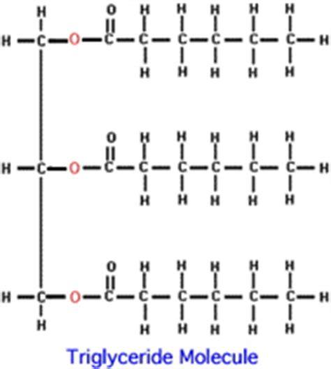 triglyceride molecule diagram green chemistry