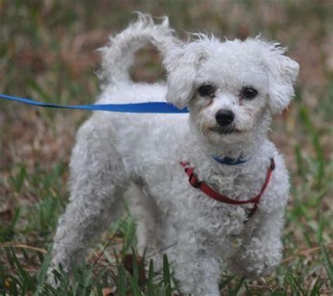puppy adoption florida florida rescue