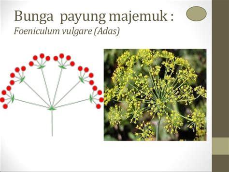 botani uas pertemuan   bunga