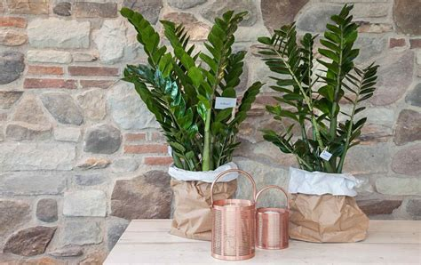 piante verdi da interno piante verdi piante da interni casa verde zubini