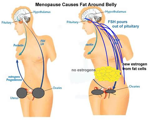weight management during menopause can you gain weight during menopause liss cardio workout