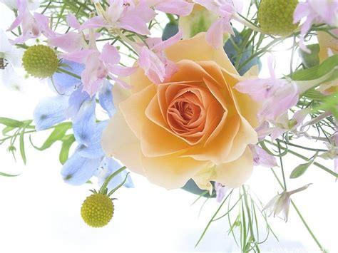 wallpaper download flower rose rose flower wallpaper high definition wallpapers high