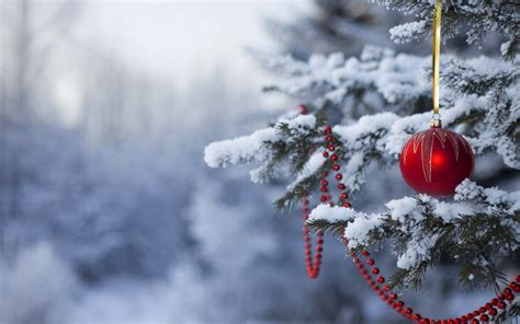bing images as wallpaper christmas holiday forest hd wallpapers