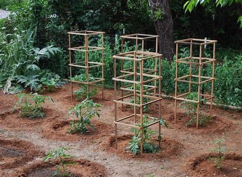 build tomato cage diy how to build wood tomato cages plans free