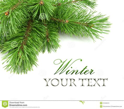christmas tree branches clipart 77
