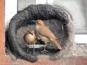 amazing bird nest construction final sense