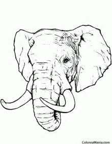 colorear cabeza elefante realista animales la