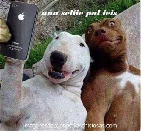 imagenes animales grasiosos ocurrencias fotos de animales chistosos imagenes de