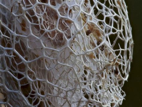 pattern and structure found in nature aqa nature structure display pinterest