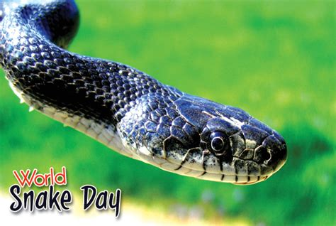 Snake Day by World Snake Day 16th July 2015 Types Facts Images About